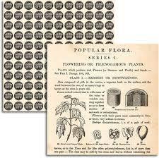 JENNI BOWLIN USA #   - Дизайнерски скрапбукинг картон 30,5 х 30,5 см.